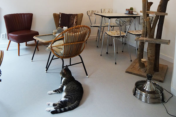 cat_cafe_amsterdam_catdonnie