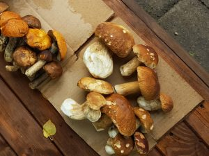suzdal-moscow-russia-market-mushrooms