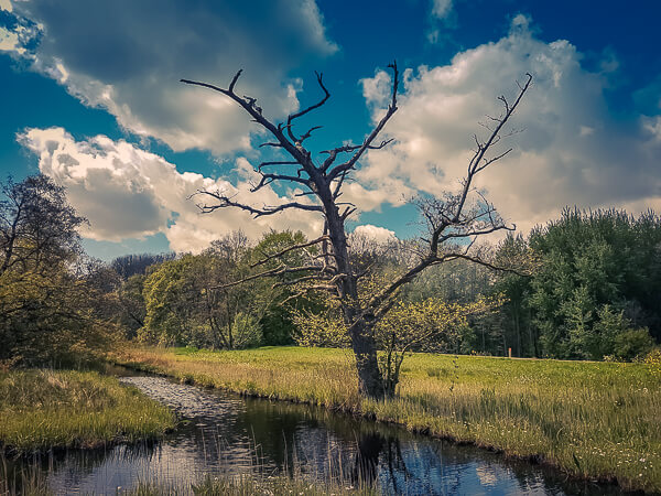 Amsterdam Forest A Day Trip For Nature Lovers Quokka Travel