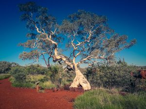 Karijini Natinal Park Two Days Australia Gumtree Quokka